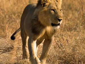 10 Nights/11Days Road Safari Package in Kenya Fotos