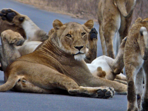 Kruger Park Wildlife Safari Photos