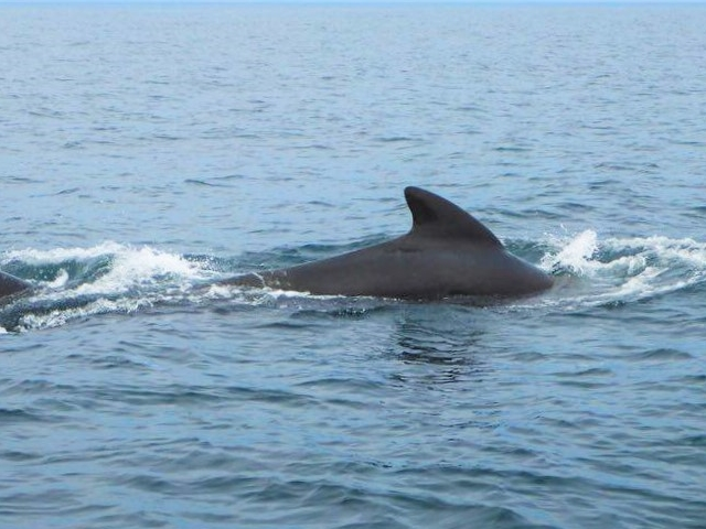 Multi Day Whale Tour To Quebec City And Tadoussac