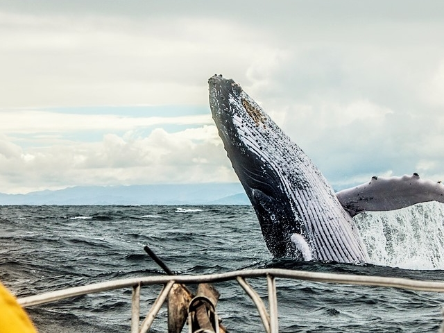 3 Day Whale Watching Tour to Quebec Photos