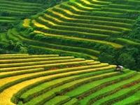 Vietnam Unfadeable Memories