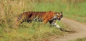 Nature Adventure Uttranchal Wildlife