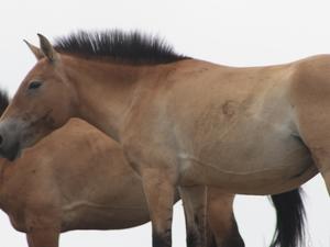 Amazing Wildlife of Mongolia Tour