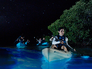 Bioluminescent Kayaking Tour Photos