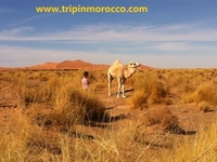 Trip In Morocco