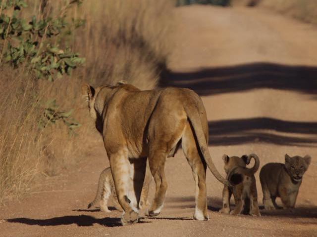 Safari - Complete Kafue & Livingstone Photos