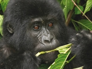 9 Days Rwanda - Uganda Safari Holiday Photos