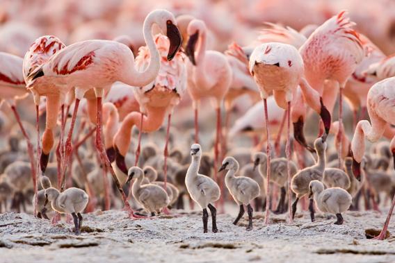 Visit Kenya & Uganda Photos