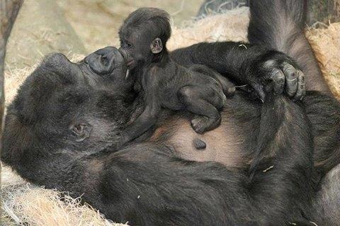 Primates & Wildlife Uganda Safari Photos