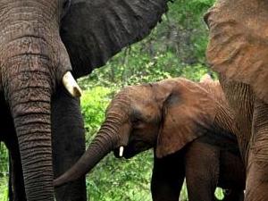 Affordable Kenya Family Safari Photos