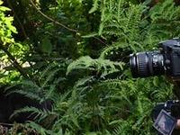 Gorilla Trekking In Bwindi Imopenetrable Forest
