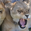 African Green Safaris