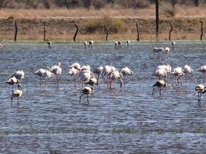 Botswana Travel Photos