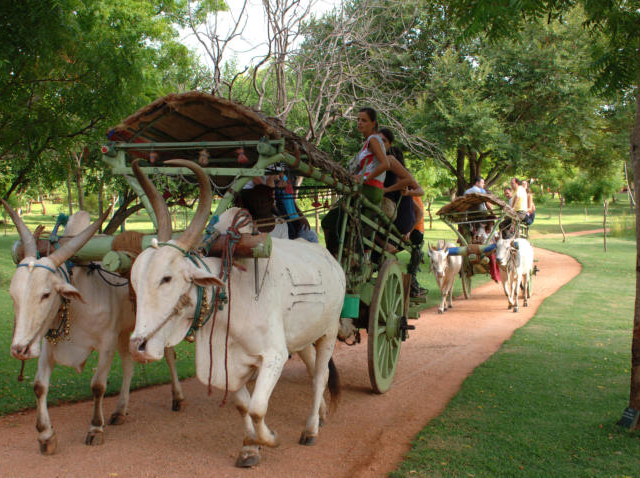 Home Stay Private Tour - Sri Lanka Photos