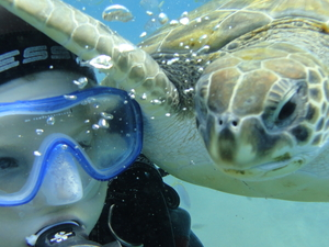 Try Your First Dive in the Shalow Lagoon in Tenerife!