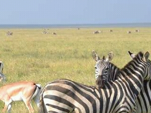 Safari Chagga