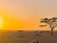 Safari Simba