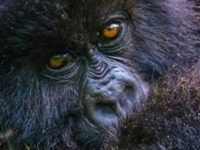 Go3 Day Uganda Gorilla Express