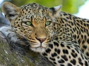 Kenya Road Safaris Photos