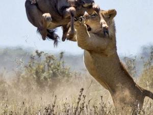 Zimbabwe Epic Adventure