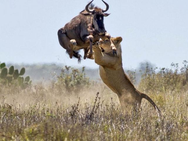 Zimbabwe Epic Adventure Photos