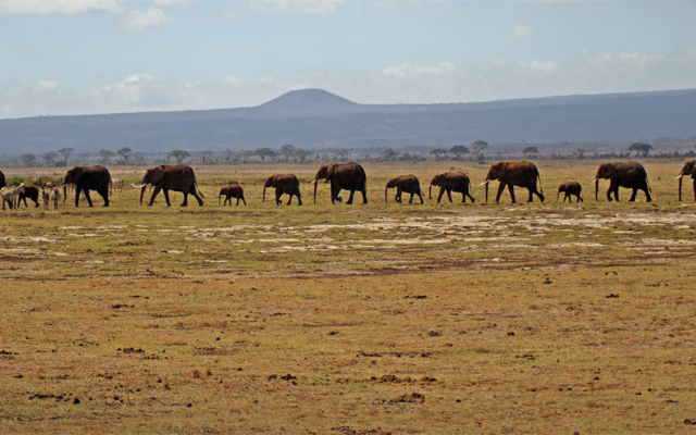 Kenya Classics Safari Private Photos