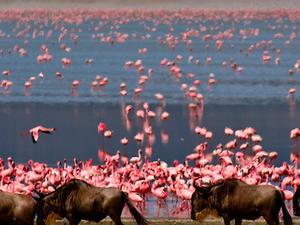 7 Days Tanzania Safari Photos