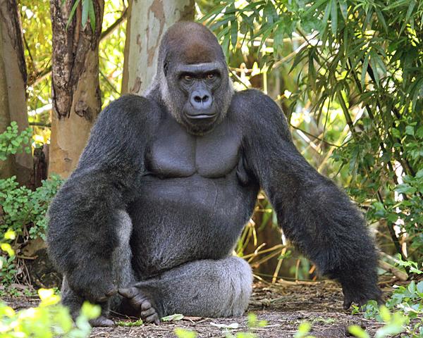 Virunga Gorilla Trekking Photos
