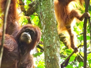 Bukit Lawang Jungle Trekking Photos