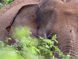 Travel Sri Lanka Photos