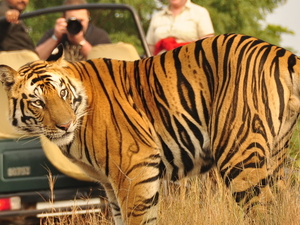 Jeep Safari in Bandhavgarh Photos
