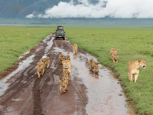 Tanzania Standard Safari - August 2017 Photos