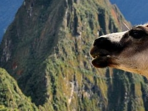 Machu Picchu Tour Photos