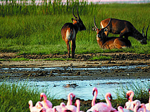 Lakes Nakuru, Baringo, Bogoria and Naivasha Tour Photos