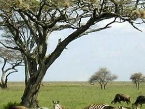 Kenya Budget Lodge Safari - Lake Tour Photos