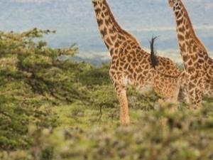 Maasai Mara Culture & Wildlife Photos