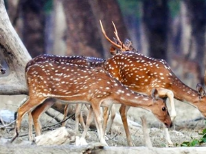 SUndarban Tour by Cruise Vessel Photos