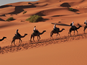 Sahara Great Tour Photos