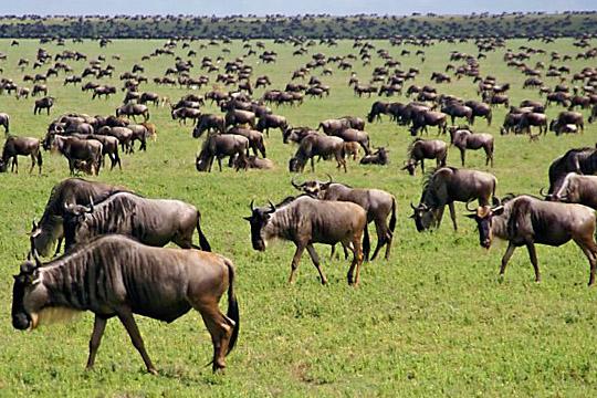16 Days Tanzania Safari and Zanzibar Photos