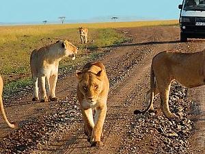 9 Days Kenya Budget Safari on Camp Photos