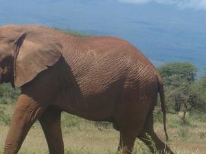 Nairobi - Amboseli - Lake Nakuru - Masai Mara - Nairobi Tour Photos