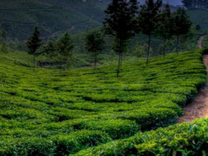 Munnar and Thekkady Package Photos