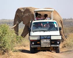 Off Road with Nature and Wildlife Safari Photos