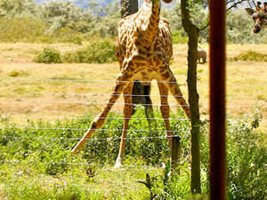 The Best of East Africa Safari - Kenya & Tanzania Safaris Photos