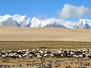 Western Tibet Tour - Mt.Kailash and Guge Kingdom Photos