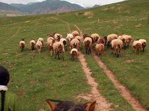 Amdo and Kham Tibetan Culture Tour Photos