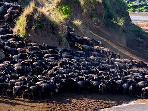 Enjoy Wildlife Safari to Great Migration. Photos
