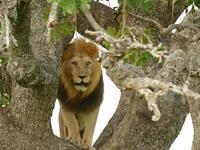 Arusha, Manyara, Ngorongoro Escapade