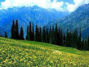 Amazing Kashmir. Photos