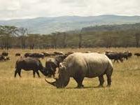 Amboseli, Lake Nakuru & Masai Mara
